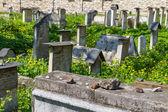 El cementerio remuh en cracovia, polonia, es un cementerio judío establecido en 1535. se encuentra al lado de la sinagoga remuh — Foto de Stock