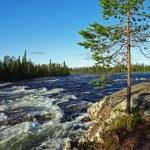 River rapids. — Stock Photo