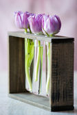 Three purple tulips in a small glass — Stock Photo