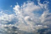鳥の飛行と曇り空 — ストック写真