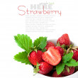 Strawberry berry with green leaf and flower — Stock Photo #10838261