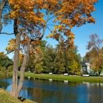 Maple tree in autumn park — Stock Photo