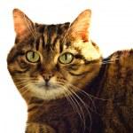 Ritratto di gatto-eyed — Foto Stock
