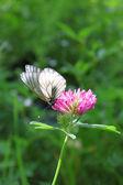 美丽的蝴蝶 — 图库照片
