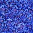 Beautiful spring flowers blue cornflower on background — Stock Photo #11109530