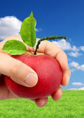 An apple in the hand — Stock Photo