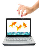 Goldfishes are in a laptop. Fishing, — Stock Photo