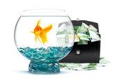 Goldfish with money — Stock Photo