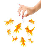 Woman feeding goldfishes — Stock Photo