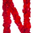 Постер, плакат: Letter N made from red petals rose on white