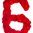 Number 6 made from red petals rose on white — Stock Photo