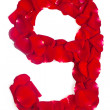 Number 9 made from red petals rose on white — Stock Photo