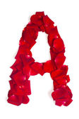 Letter A made from red petals rose on white — Stock fotografie