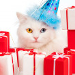 White cat with gifts — 图库照片