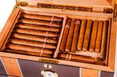 Cigars in humidor — Stock Photo
