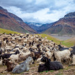 Mountain goats, Spiti Valley — Stock Photo