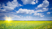 Wonderful rapefield and cloudscape with sunbeams. — Stock Photo