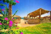 Flores finas y playa exótica. — Foto de Stock