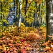 Amazing grove  covered by autumnal carpet. — Stock Photo
