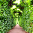 Arch, decorated with plants in Schonbrunn garden, Vienna - Stock Photo