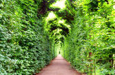 Arch, decorated with plants in Schonbrunn garden, Vienna — Stock Photo