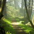 Forest Path — Stock Photo #10737933