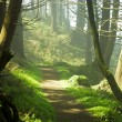 Forest Path - Stockfoto