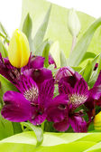 Purple Alstroemeria Flowers — Stock Photo