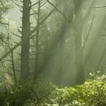 Forest Sunlight — Stock Photo #11472863