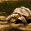 Turtle — Stock Photo #12406970