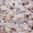 Raw chicken broilers — Stock Photo