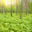 Stock Photo: Morning in summer wood.