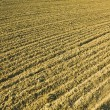 Plowed ground — Stock Photo