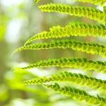 Green Fern Leave — Stock Photo
