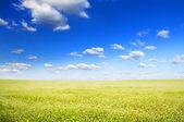 Big field of flowers under blue sky. — Stock Photo