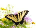 Butterfly Tiger Swallowtail (Pterourus glaucus) on flowers Monarda — Stock Photo