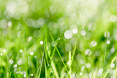 Morning dew drops — Stock Photo