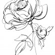 Sketch of rose on a white background — Stock vektor