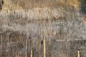 Textura de madeira compensada — Foto Stock