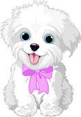 Perro faldero de blanco — Vector de stock