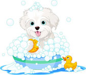 Fluffy dog having a bath — Stock Vector