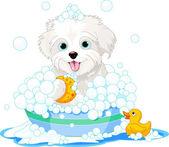 Fluffy dog having a bath — Stock Vector
