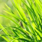 Sunlit Green Summer Grass — Stock Photo