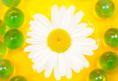 Beautiful Daisy Flower on Water — Stock Photo