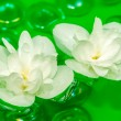 Delightful White Jasmine Flowers Floating on Water — Stock Photo