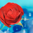 Beautiful Red Rose with Dew Drops on Water — Stock Photo