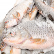 Stock Photo: Frozen Fish