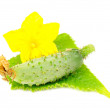 Little Green Cucumber with Leaf and Flower — Stock Photo