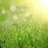 Um campo verde — Foto Stock