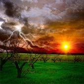 果樹園 — ストック写真